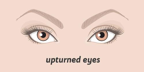 Aufschwingende Augen